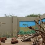 Robin-Huffman-CARE-chacma-baboon-orphan-mural