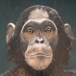 Robin-Huffman-Nanga-chimpanzee-painting-sign-Ape-Action-Africa-Cameroon