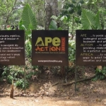 Robin-Huffman-Ape-Action-Africa-mission-statement-sign-Cameroon