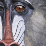 Robin-Huffman-painting-sign-mandrill-Ape-Action-Africa-Cameroon