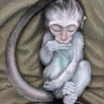 Robin-Huffman-Ayla-acrylic-painting-vervet-orphan-VMF