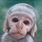 Robin-Huffman-Keksie-acrylic-painting-vervet-monkey-orphan-VMF