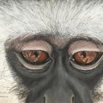 Robin-Huffman-Mowgli-painting-vervet-orphan-monkey-VMF