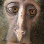 Robin-Huffman-Witness-acrylic-painting-lesula-bushmeat