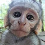 Robin-Huffman-Keksie-vervet-monkey-orphan-photograph-VMF