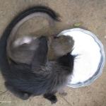 Robin-Huffman-Monkey-Yin-Yang-Ape-photograph-Ape-Action-Africa