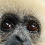 Robin-Huffman-Gary-gibbon-photograph-IPPL-Summerville